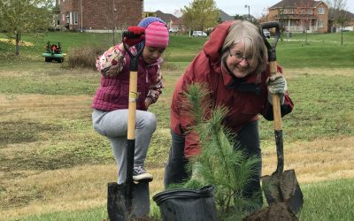 Community Tree Planting at Kettle Pond Trail coming soon